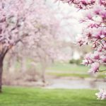 Places to Enjoy Nature This Spring