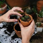 Home Gardening Tips to Beautify Your Yard